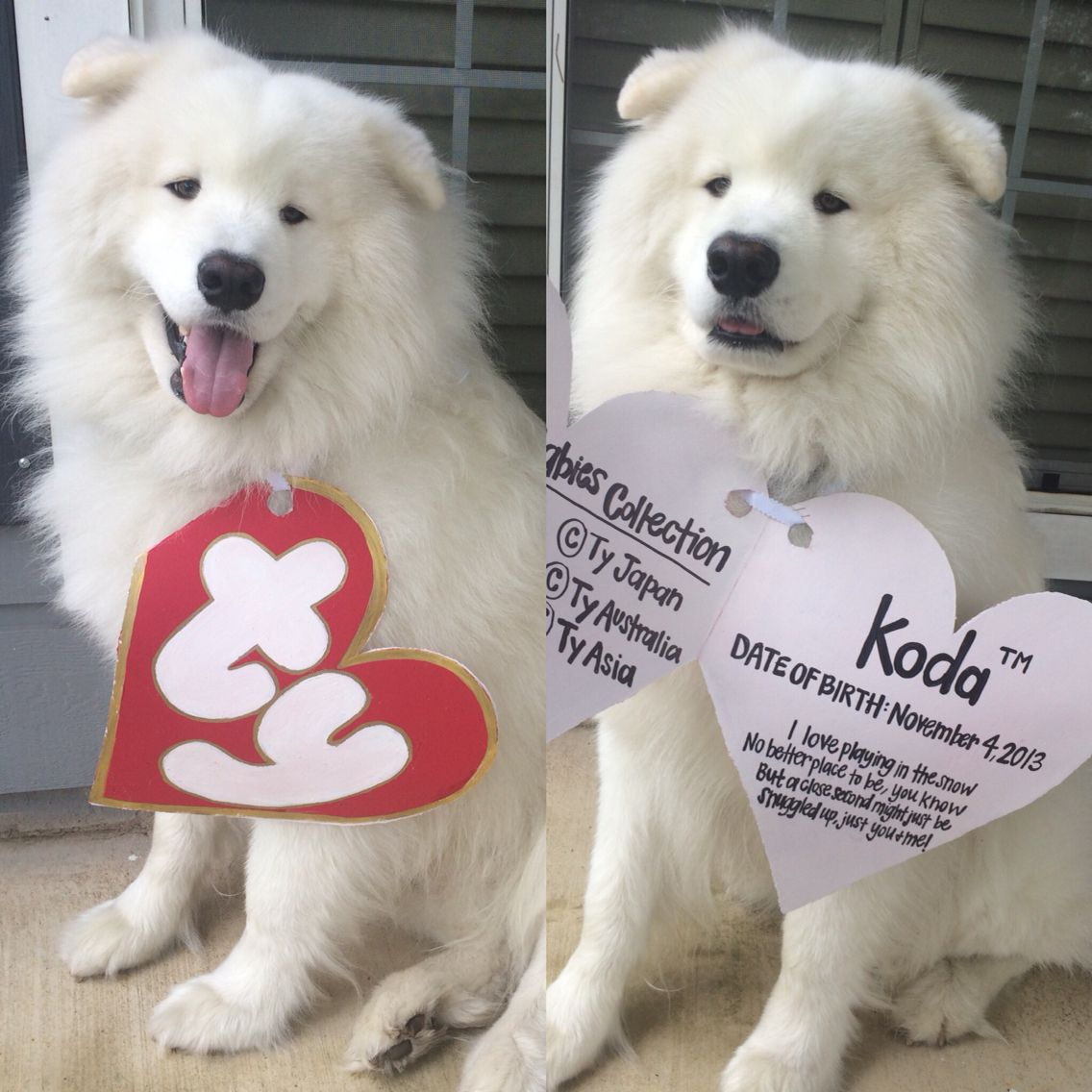 My dog kodathesamoyed in his beanie baby costume for