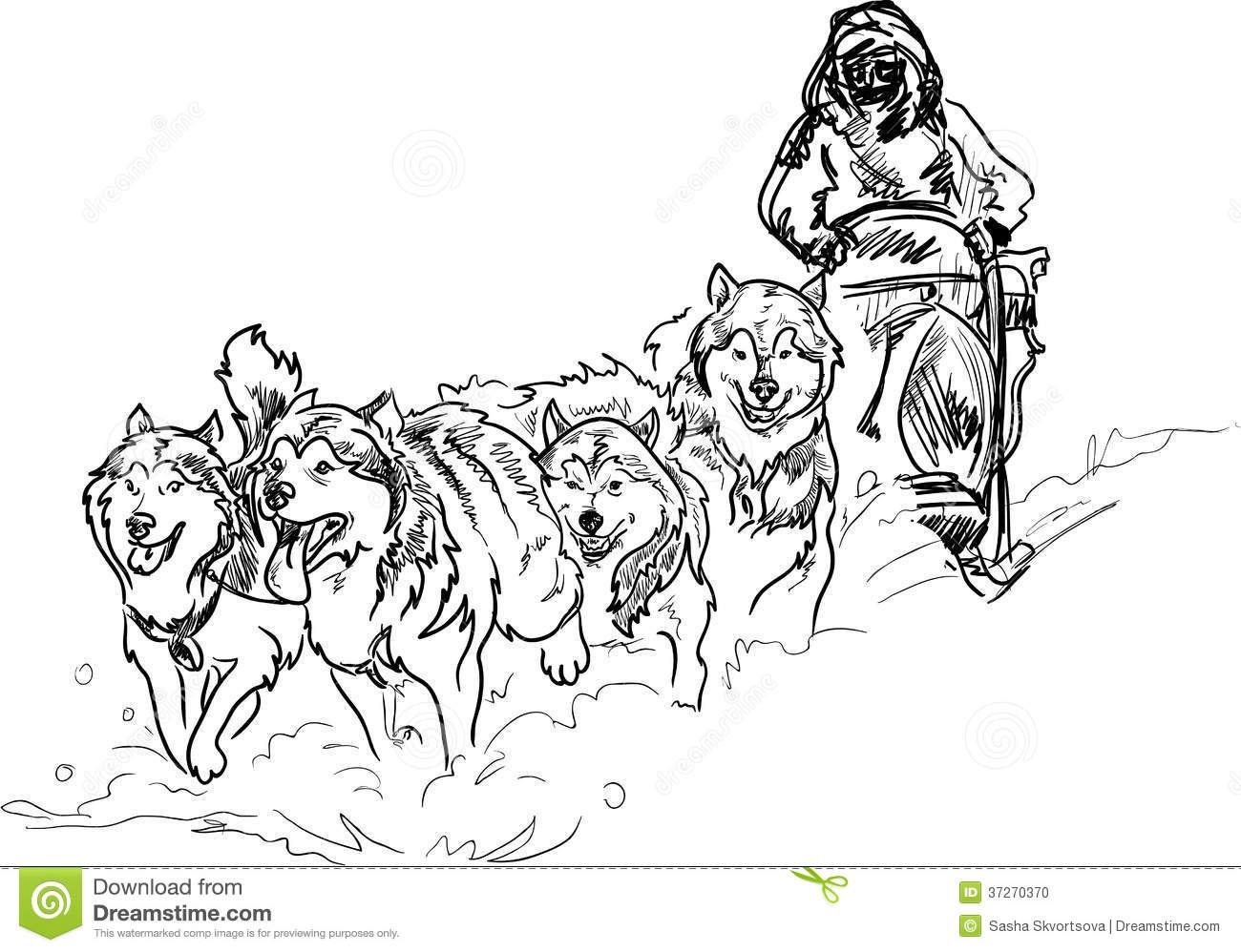 Sled Dog Coloring Pages Stock Photo Alaskan Sled Dogs Dibujos