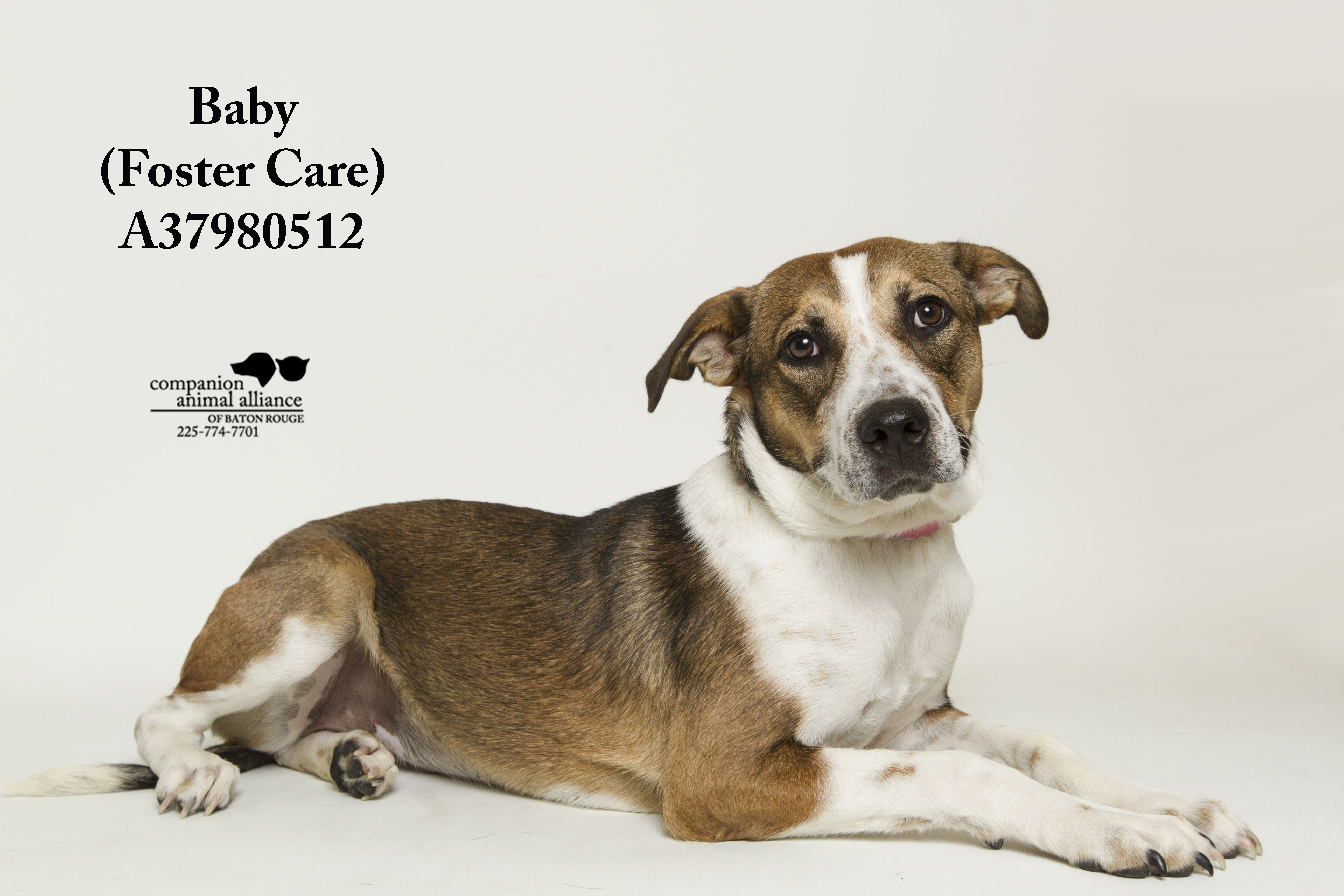 Adopt Baby (Foster Care) on Foster care, The fosters