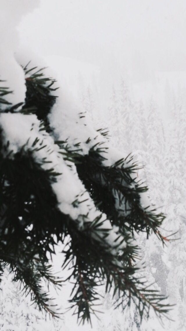 White Christmas Iphone Wallpaper Tumblr Wallpaper Iphone Christmas Christmas Wallpaper Iphone Tumblr White Christmas Background