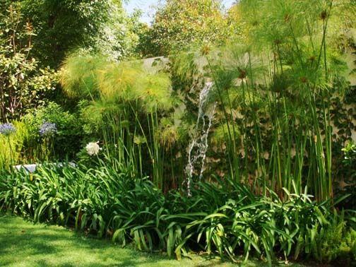Agaphantus y papiros paisajismo jardines arboles para - Arboles jardin ...