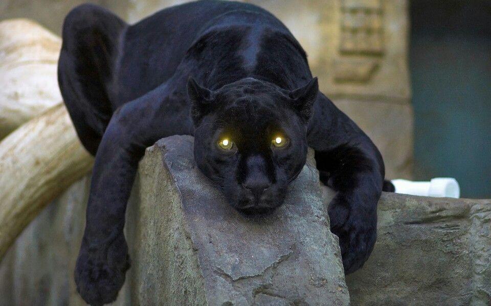 Pantera Negra: Pantera Negra. Mira Sus Ojos.