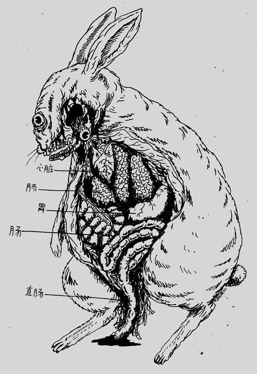 rabbit anatomy | Weird Science | Pinterest | Anatomy, Rabbit and ...