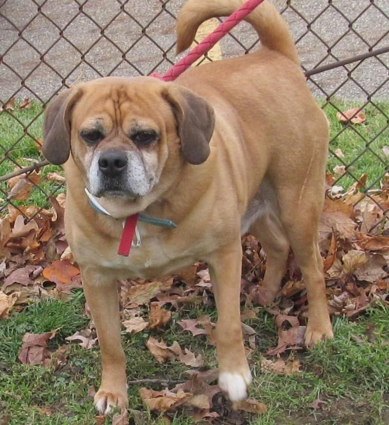 Adopt 27 Merle/Transfered humane society on Save a dog