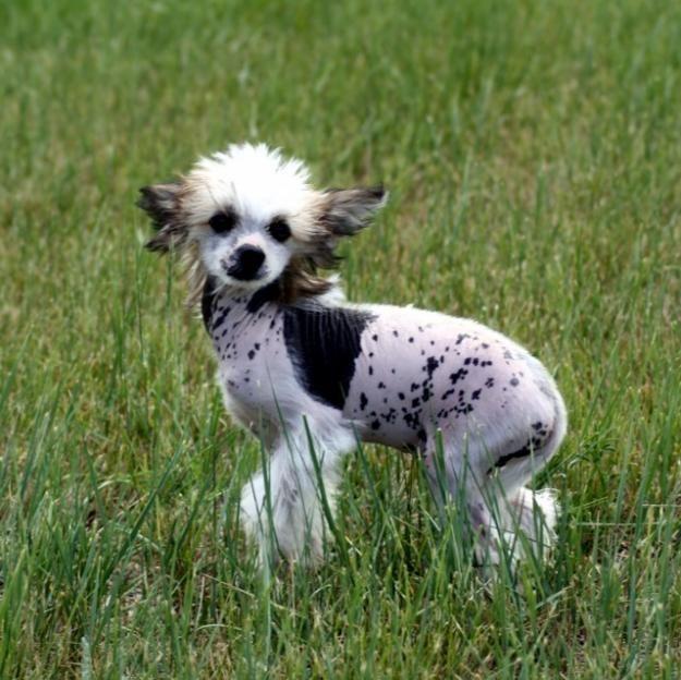 17 bästa bilder om Puppies på Pinterest | Valpar, Söta valpar och ...