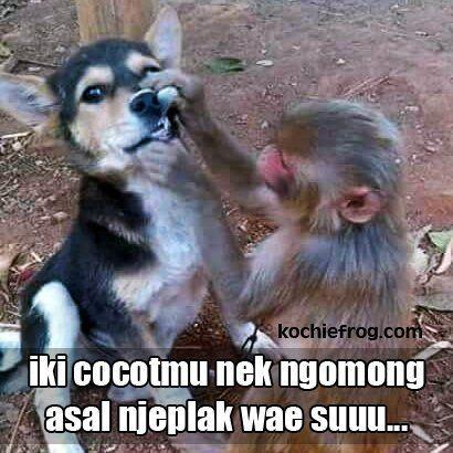 Download 55 Download Gambar Monyet Lucu Bahasa Sunda Terbaru