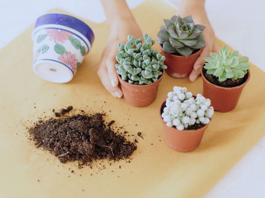 Photo of How to Repot Cacti and Succulents | World of Succulents