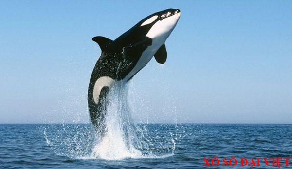 giải mã nằm mơ thấy cá voi