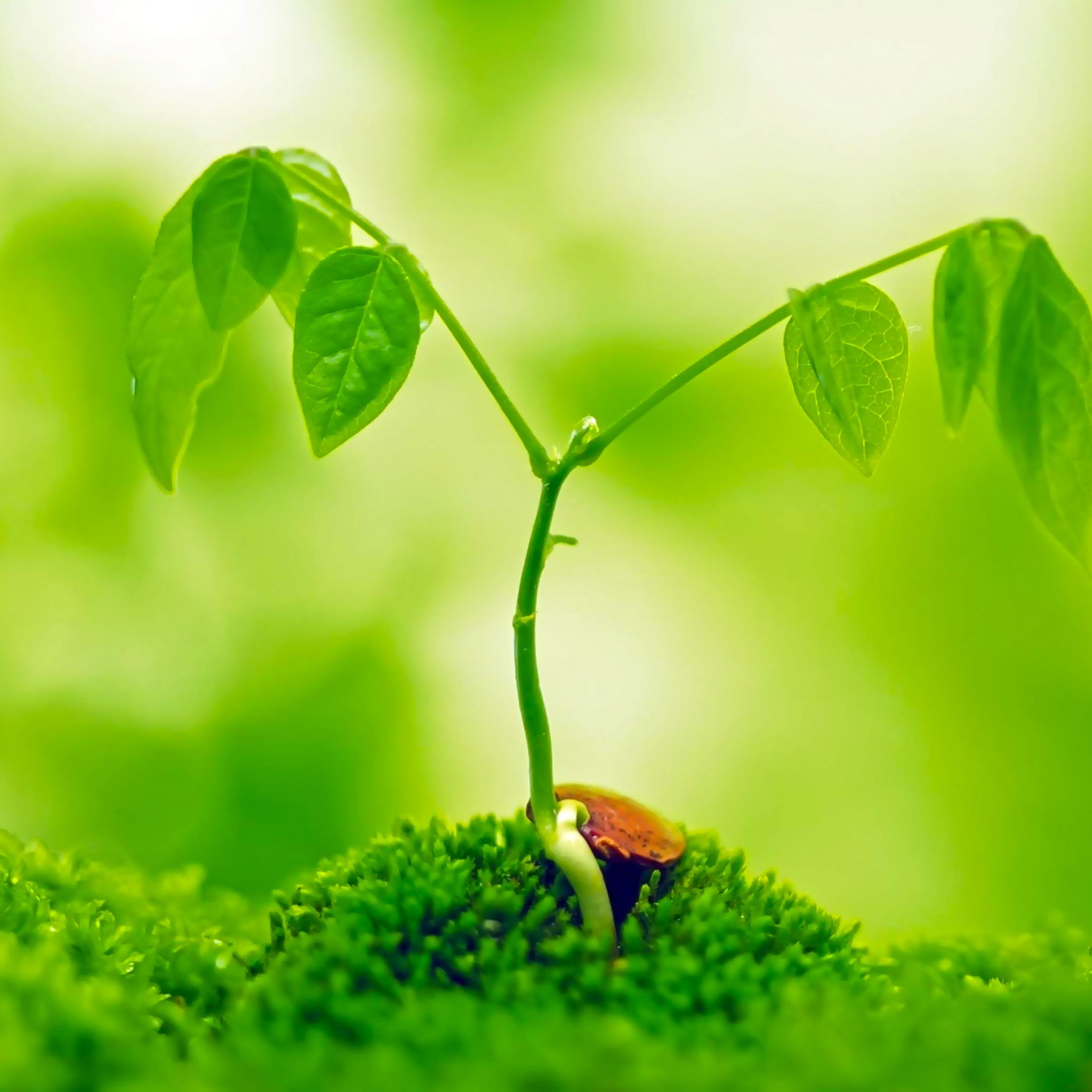 Pin by Digital Rain Lucky Rice on Plants Stages of growth