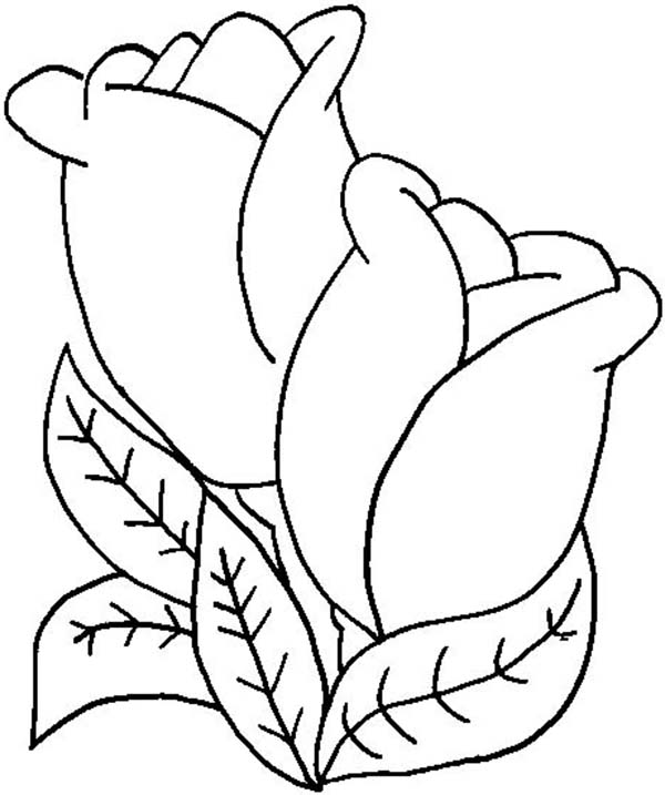 A Pair Of Tulips Sheath For Decoration Coloring Page ...