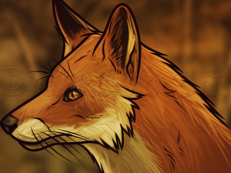How To Draw A Fox Head By Dawn Fox Drawing Tutorial Fox Drawing Drawings