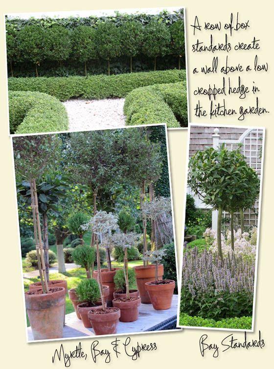 Tete A Tete Charlotte Moss Topiary Patio Garden English Garden