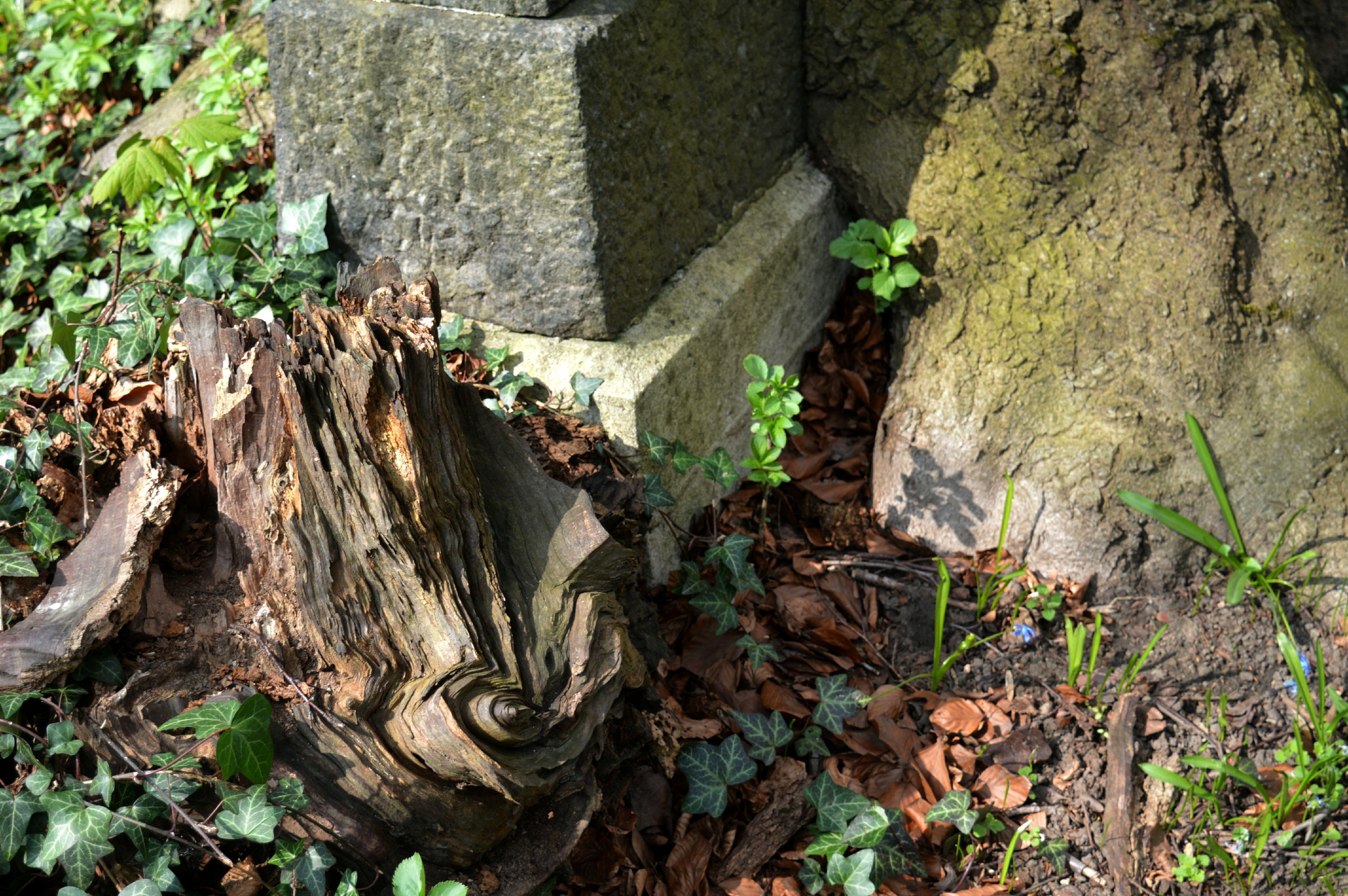 Friedhof Lindener Berg (62)
