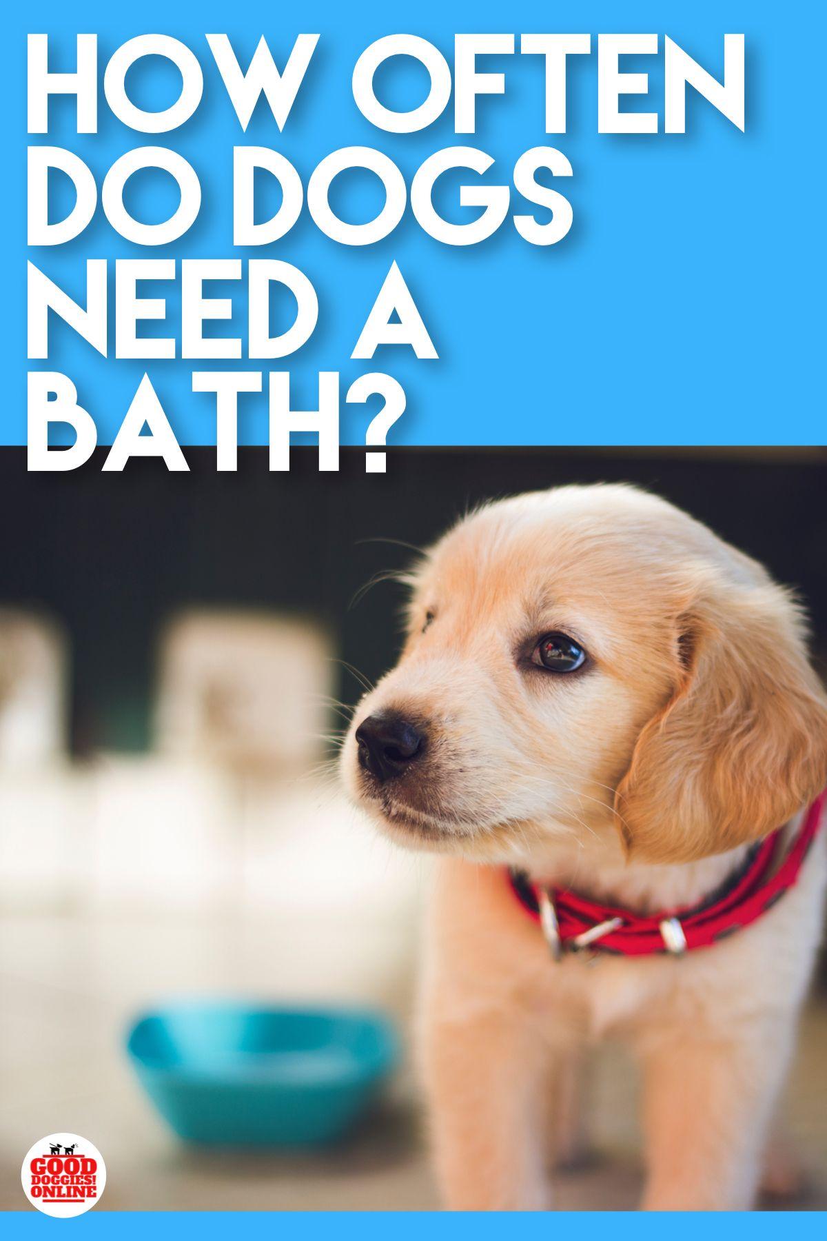 How Often To Bathe A Dog Bathing A Puppy Dog Training Dog