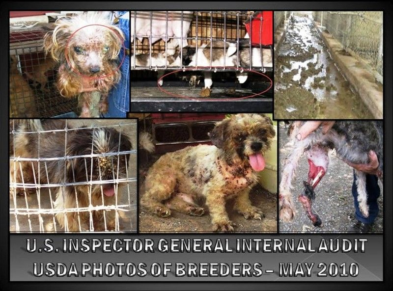 """STOP the puppy mills! According to the USDA, """"The previous"""