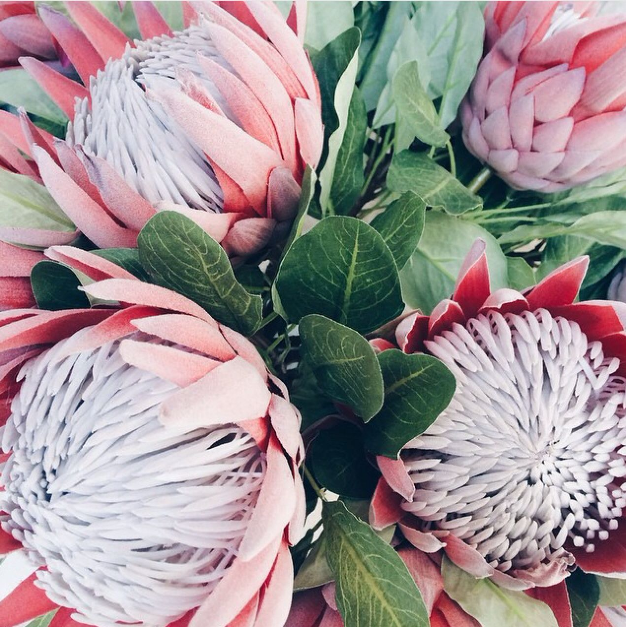 King Protea Flower Fiftyflowers Com Protea Flower Flower Bouquet Wedding White Wedding Flowers