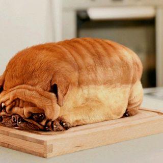 Is It A Pug Or A Loaf Of Bread Kind Of Hard To Tell Lol Dog