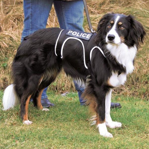 Pet Accessories Trixie Xsport Soft Harness L Xl Keep Your