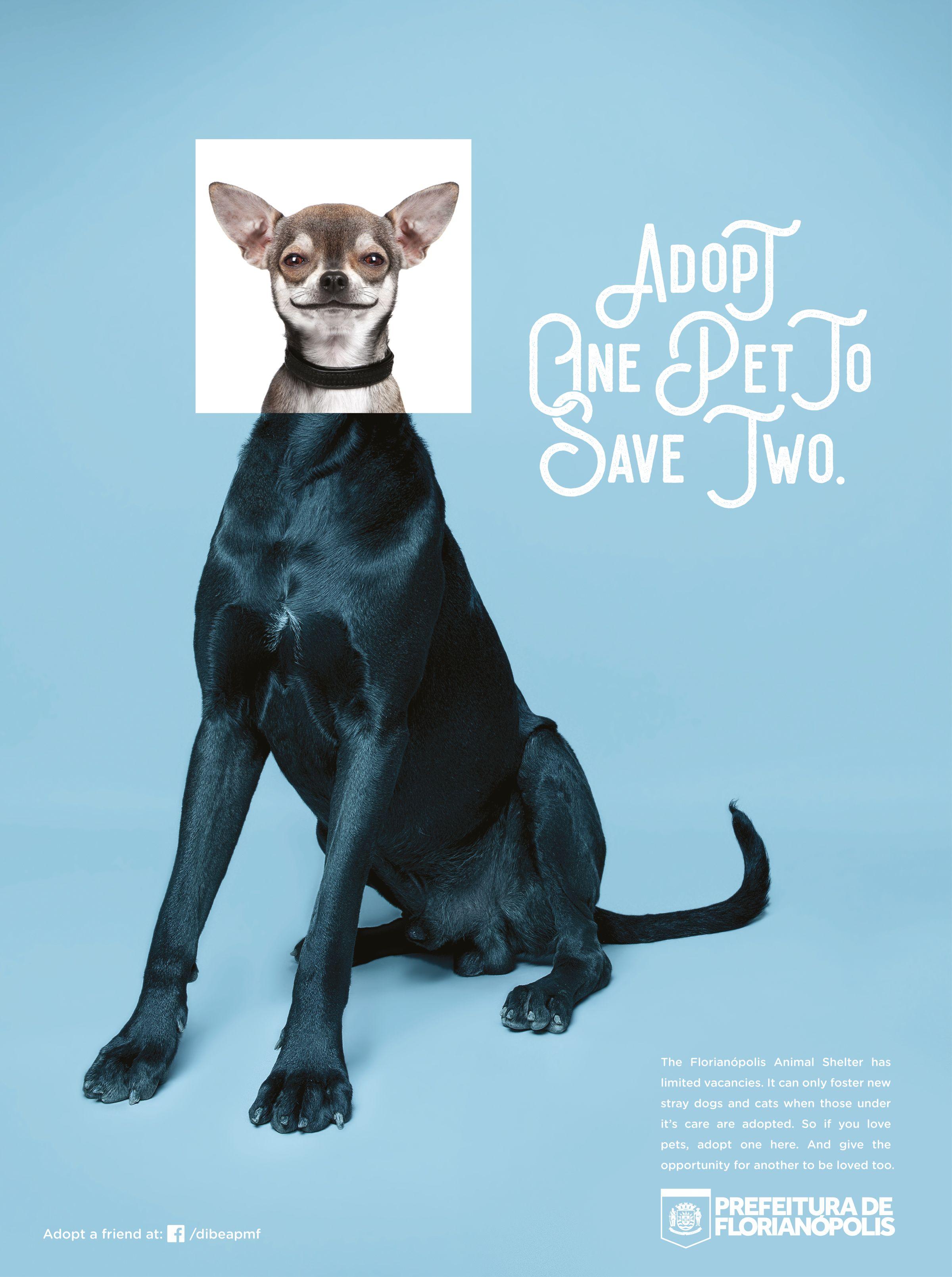 City Of Florianopolis Pets Adeevee Ideias De Design Design Grafico Portfolio