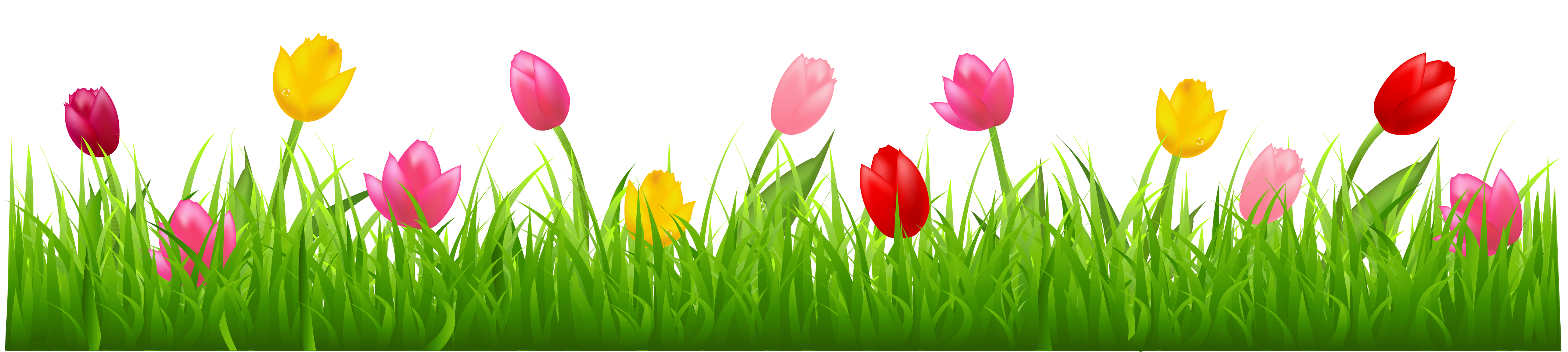 Grass with Colorful Tulips PNG Clipart   Spring Borders ...