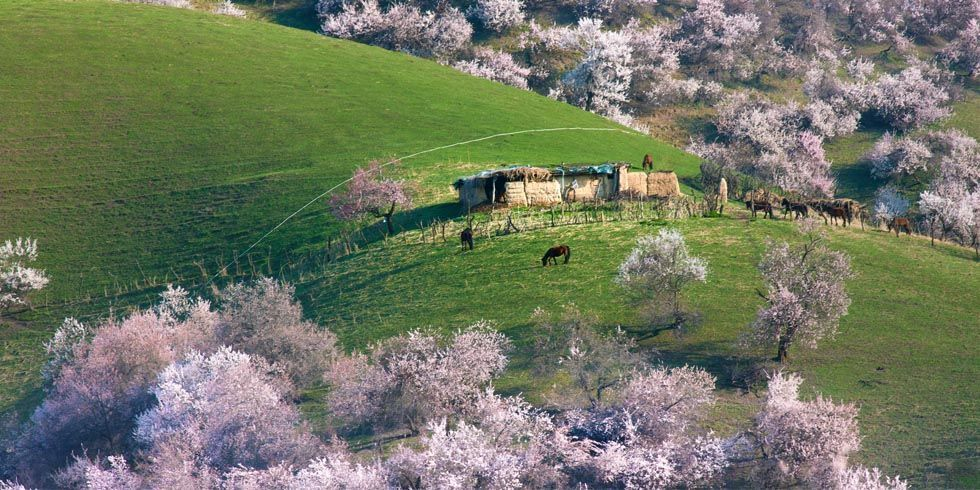 We like #housebeautiful Magazine. Interesting ideas - China's Apricot Valley During Full Bloom Is the Most Majesti https://t.co/ITcZ8pFlXh Call Frank Magaldi for all your logo Promotional Items - 904-874-8516