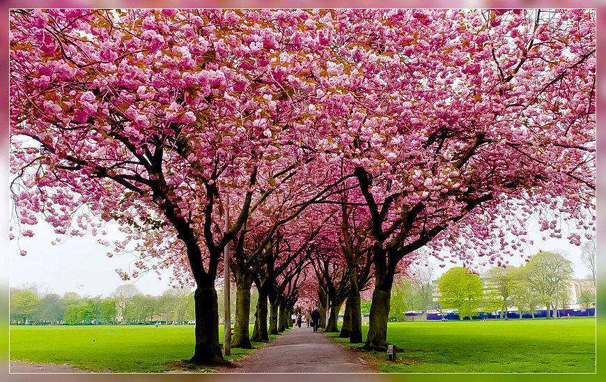 Spring In Scotland Spring Wallpaper Free Spring Wallpaper Spring Pictures