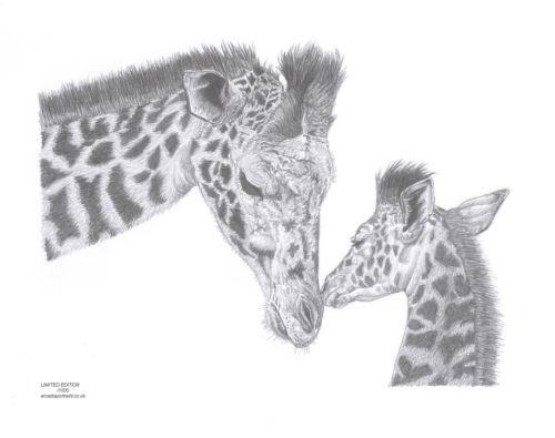 Giraffe Mother Calf Baby Giraffe Wildlife Art Pencil Drawing - griffe für küche