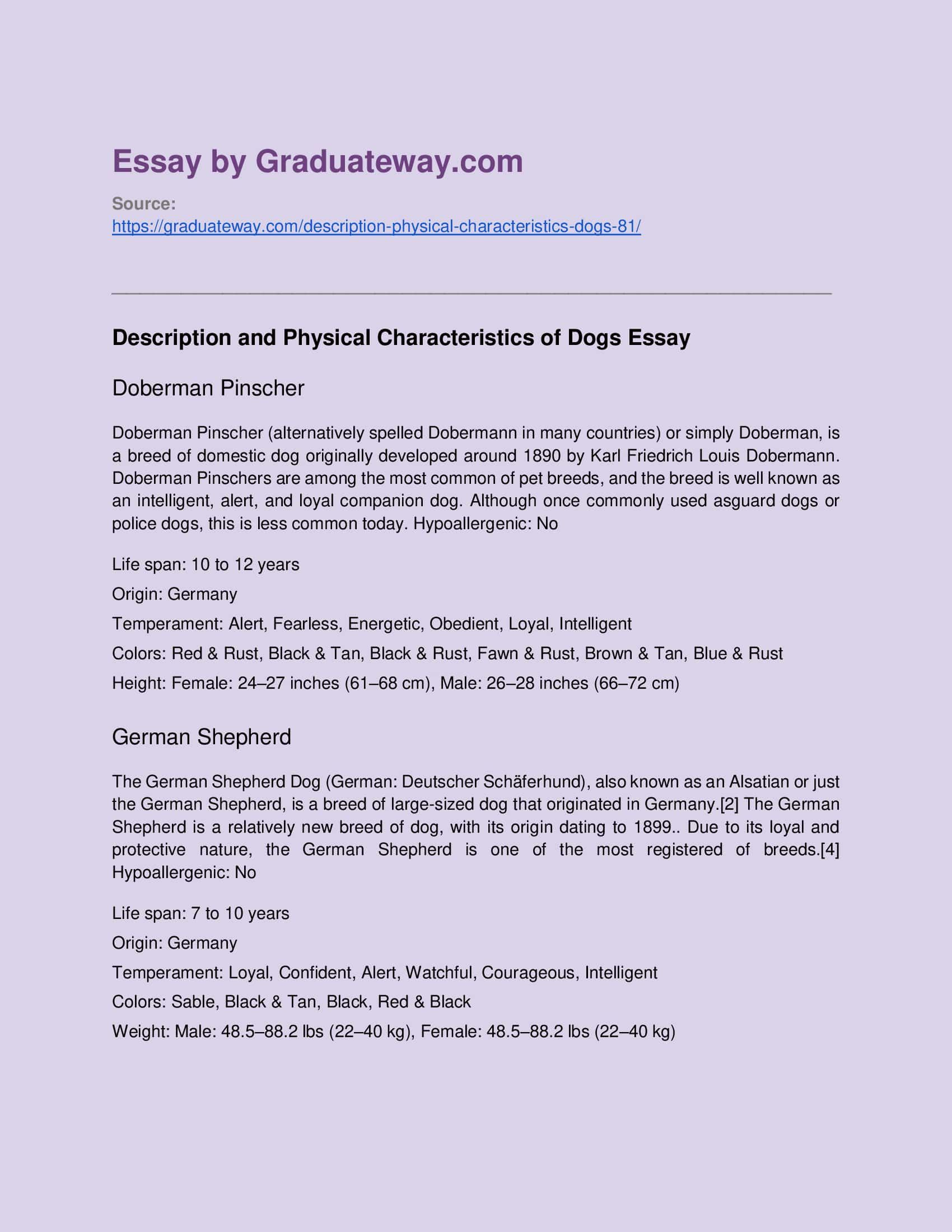 Description Of A Dog Essay Example On Place