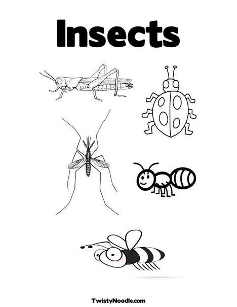 Insects Coloring Page from TwistyNoodle