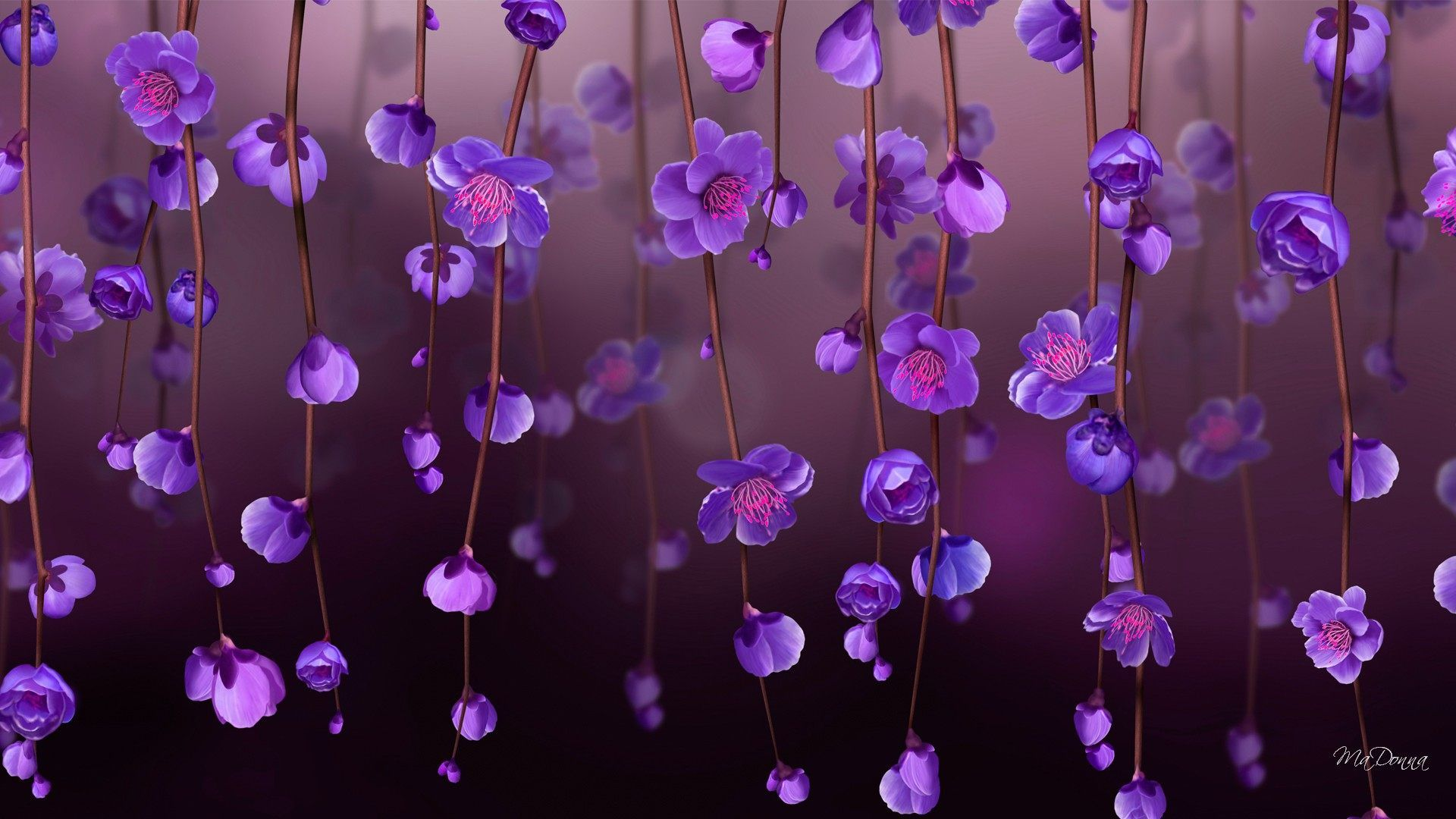 Beautiful Purple Flower Wallpapers High Quality On High Resolution Wallpaper Paarse Bloemen Paarse Achtergronden Paars