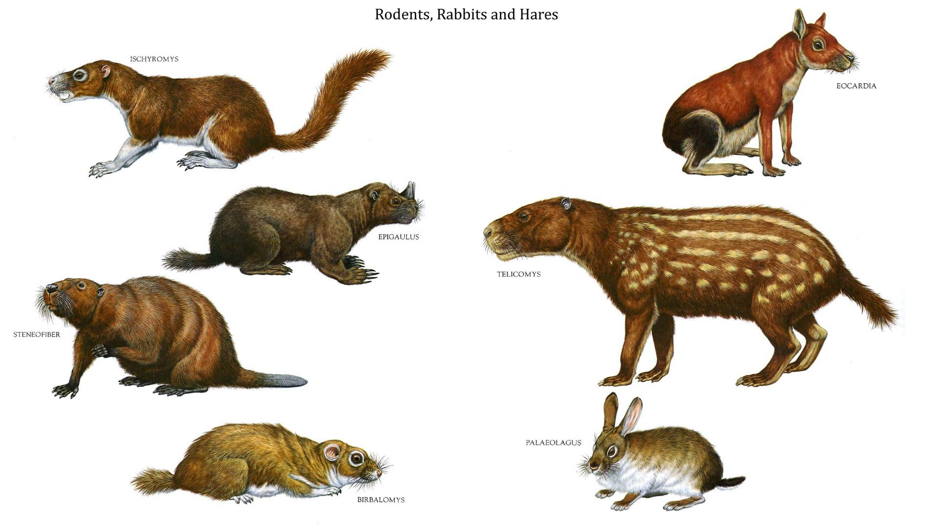 Rodents Rabbits And Hares Prehistoric Animals Extinct