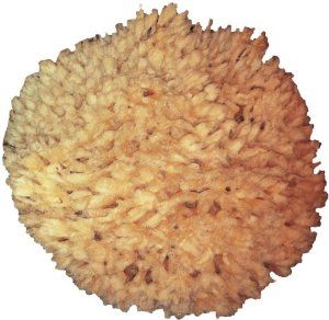 K Hall Designs Sponge by k hall designs. $22.98. Lasts for years. This sponge is ethically harvested in usa. About six -inch in diameter. k hall Sea Sponge. About six -Inch in diameter, this sea sponge is ethically harvested in the USA and will last for many years under normal usage.