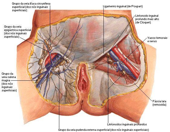 Aula de Anatomia | Sistema Linfático | R N | Pinterest | Sistema ...