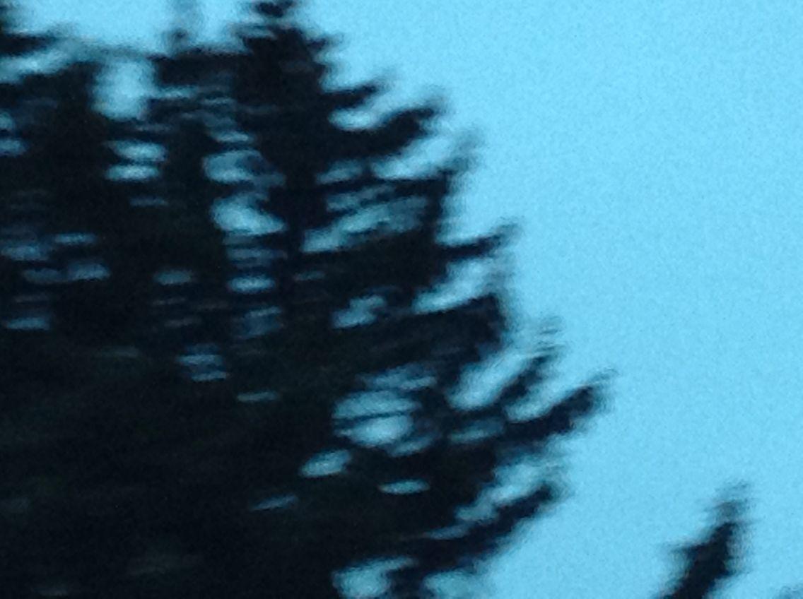 Beautifull tree in gf