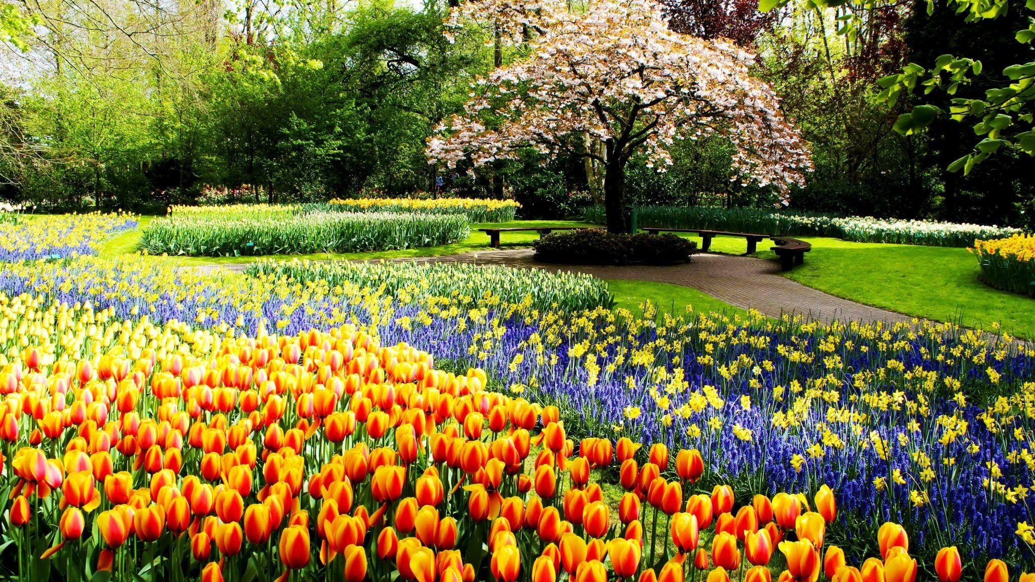Tulipanes primavera park svetik parques, jardines de