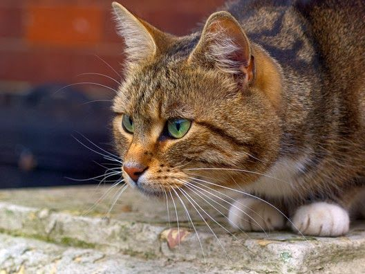 Żywienie kota alergika