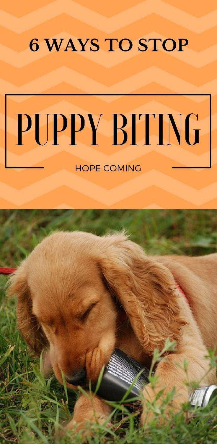6 Ways To Stop Puppy Biting And Nipping Puppy Biting Child Face