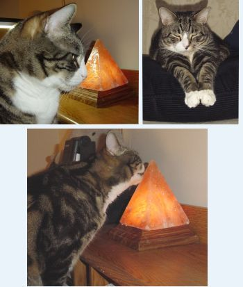 Salt Lamps And Cats Fascinating Tigger & Pyramid Salt Lamp  A File To Look At Later  Pinterest Decorating Inspiration