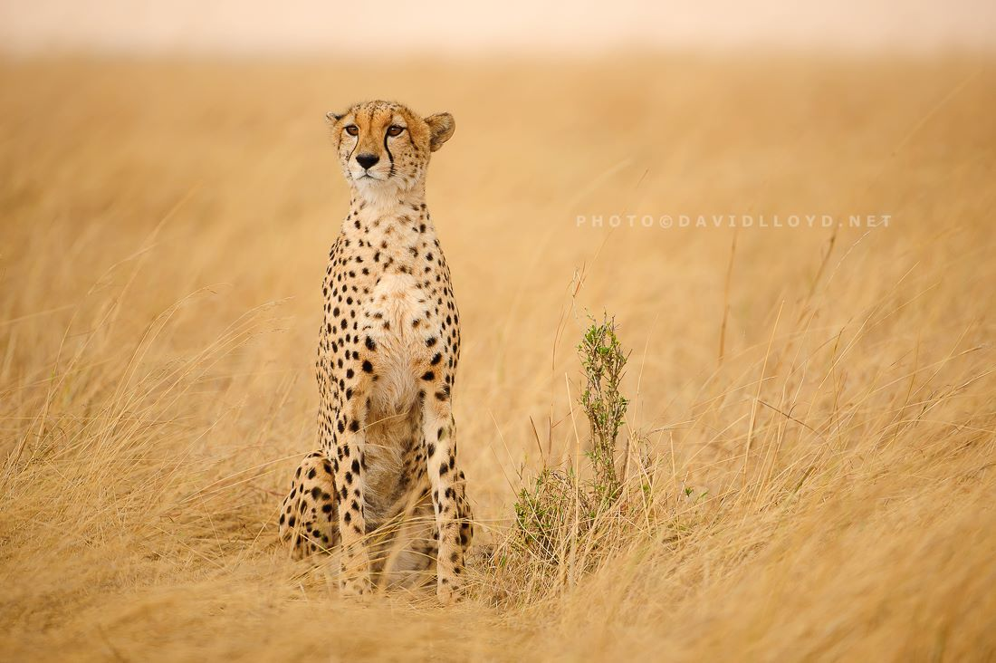 David Lloyd Wildlife Photography