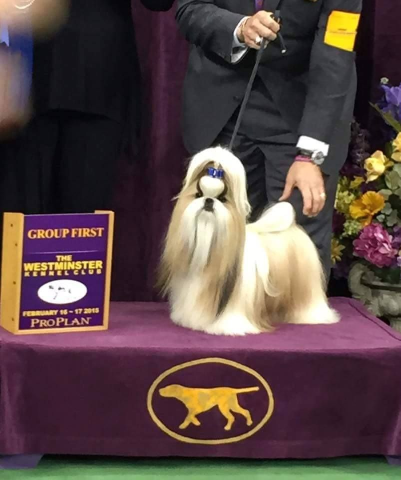 Westminster Kennel Club Dog Show 2015 Winner Of The Toy Group Is