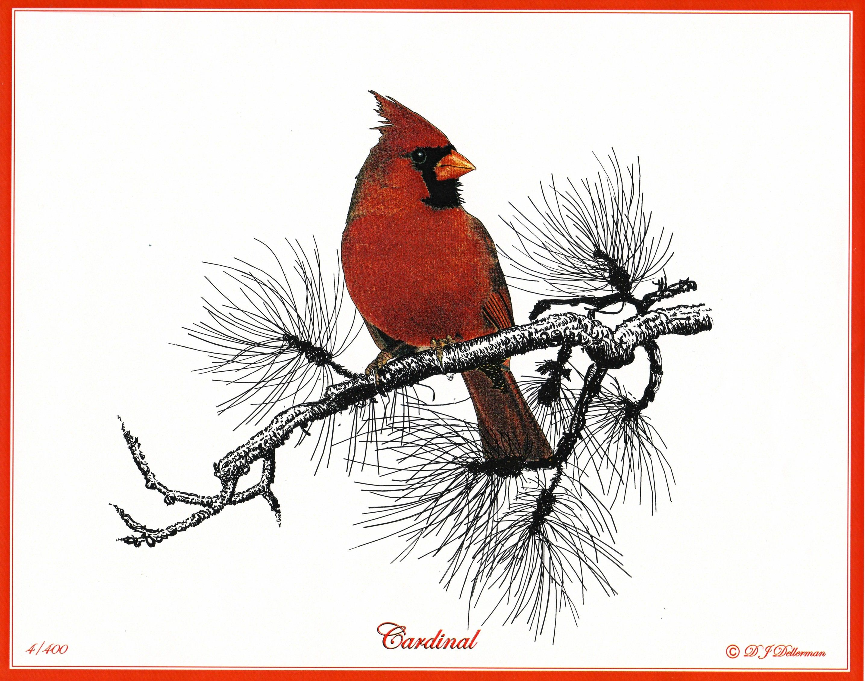 Cardinal-Bird-Drawing.jpg (2871×2261) | Art inspirations ...