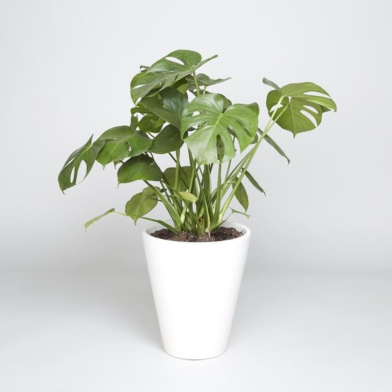 House Plants For Shady Rooms: Low-Maintenance Houseplants That Can Thrive Anywhere (Even