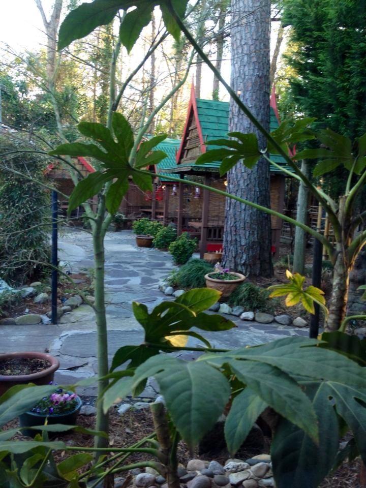 Garden patio indochine thai restaurant wilmington nc