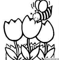 Animales De Primavera Para Colorear Dibujos Para Colorear De La
