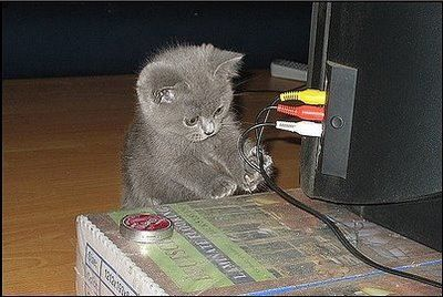 Cute Kitten Scared Of Cable | Chats drôles, Chat, Kawaii