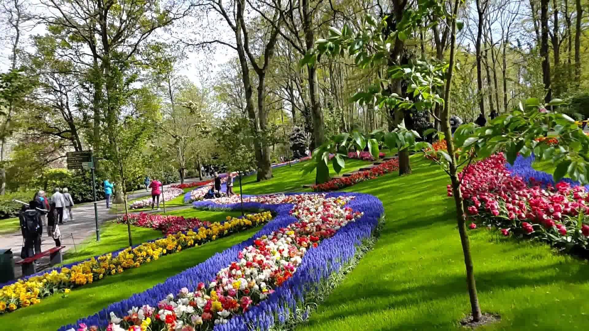 fondo de pantalla de jardin de flores de primavera