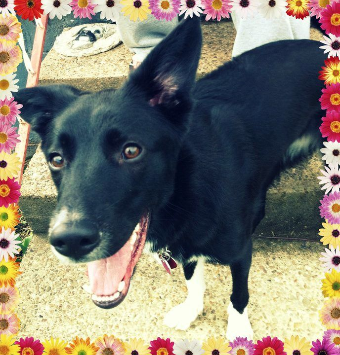 Daisy Found Forever Home Pet Helpers Pets Animals