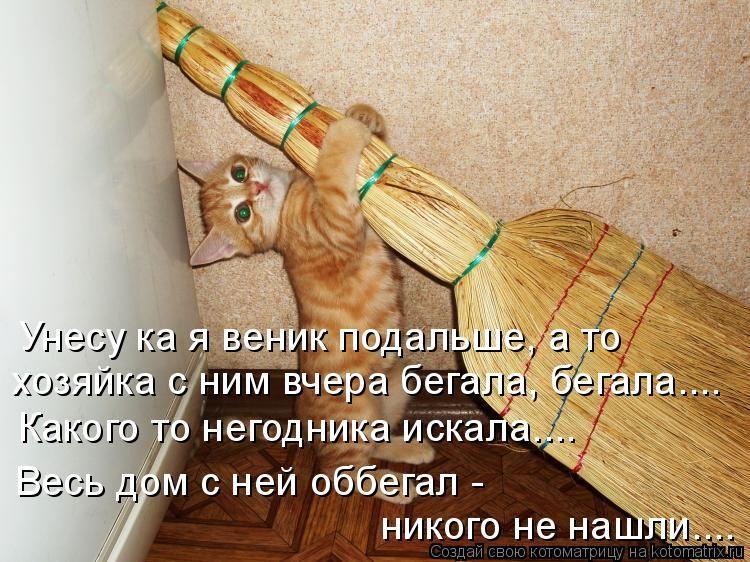 Котоматрица для поднятия настроения. Обсуждение на LiveInternet - Российский Сервис Онлайн-Дневников
