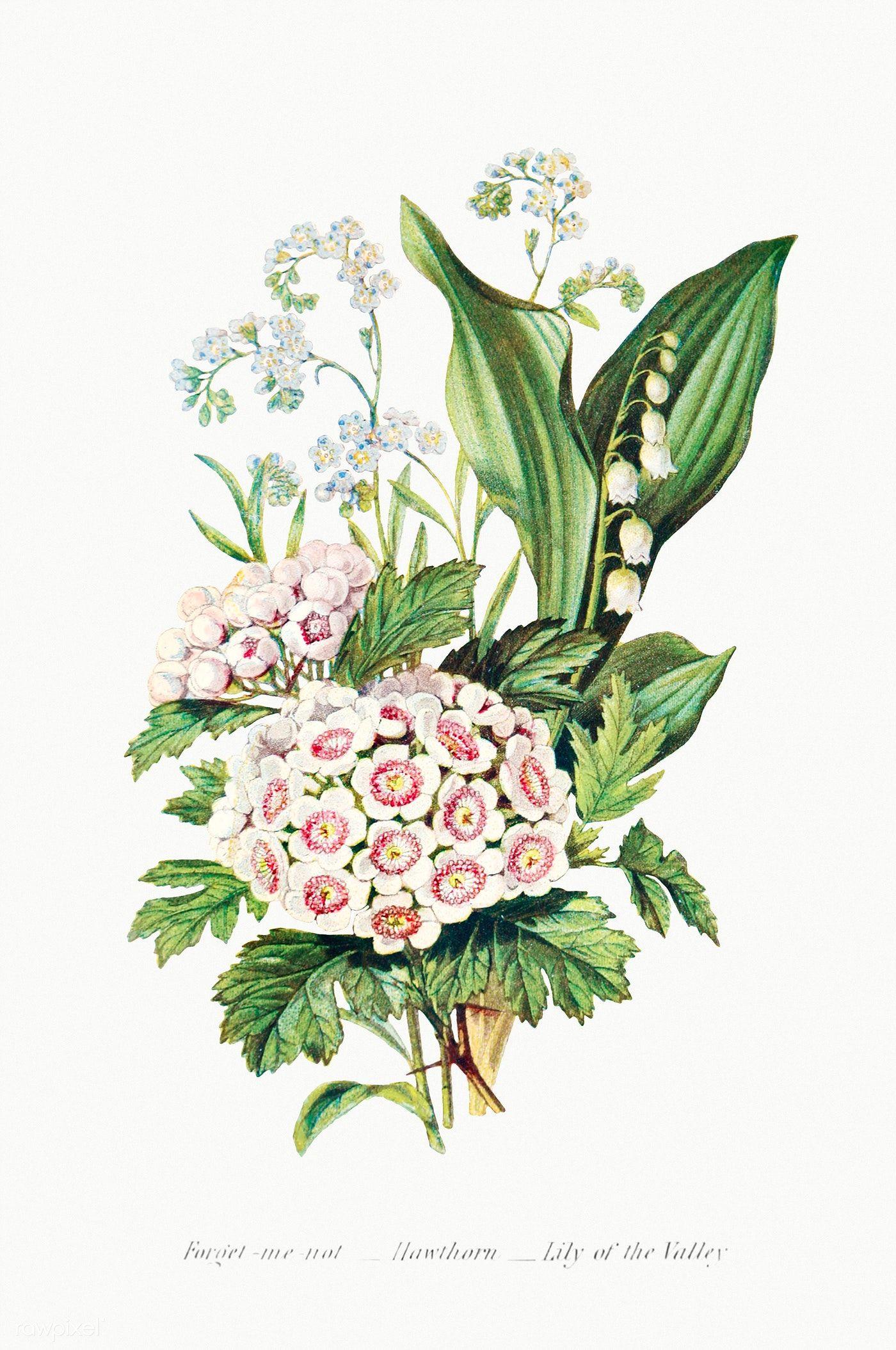 Vintage Flower Bouquet Mockup Premium Image By Rawpixel Com In 2020 Summer Flower Bouquet Flower Illustration Flowers Bouquet