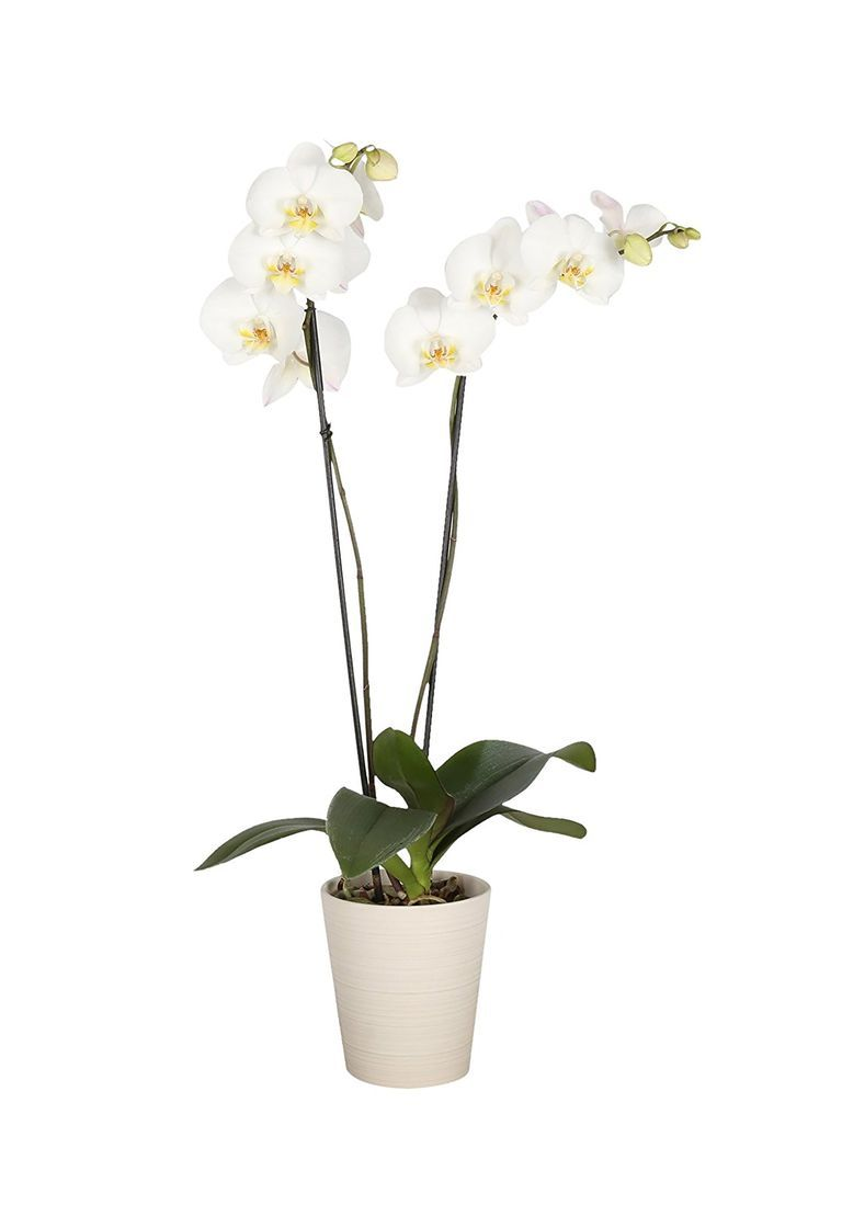 Thoughtful Mother S Day Gift Ideas From Daughters Mothers Day Flowers Orchids Mothers Day Gifts From Daughter